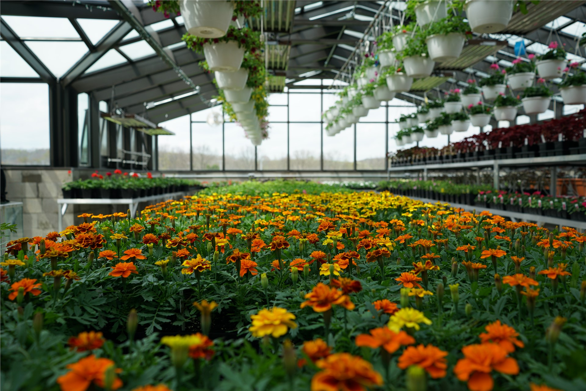 Green House Flowers